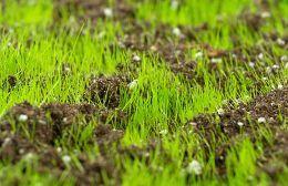 So Saen Sie Ihren Mehrjahrigen Weidelgras Rasen Neu Fashionshoot Fashioninsta Fashiontrend Fashionworld Weddin Seeding Lawn Reseeding Lawn Spring Lawn Care