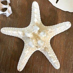 70 White Starfish In Bulk Starfish 1 To 2 5 8 Inch Etsy In 2020 Nautical Decor Starfish Craft Wedding