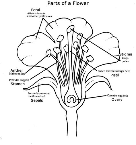 Learn About Plants With Flower Dissection