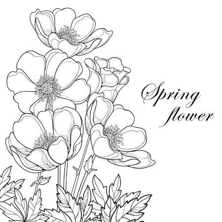 Bouquet With Outline Anemone Flower In 2020 Flower Drawing Flower Illustration Flower Bouquet Drawing