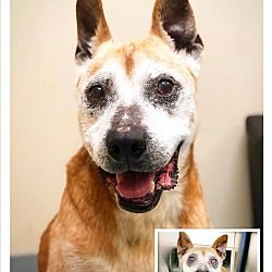 Pin By Tk Greening On Doggie Love Pitbull Terrier Pets Pet