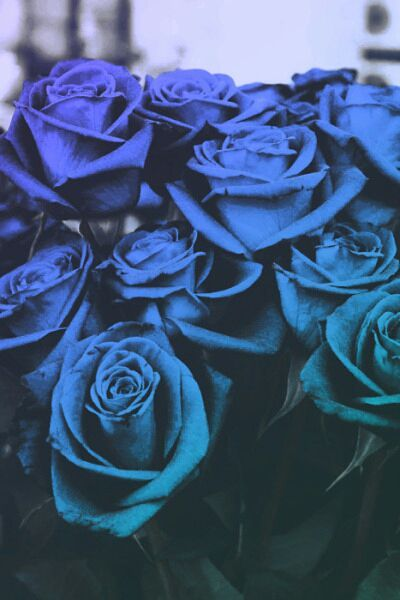 𝘼𝘦𝘴𝘵𝘩𝘦𝘵𝘪𝘤 𝙒𝘢𝘭𝘭𝘱𝘢𝘱𝘦𝘳 Blue Roses Wallpaper Blue Roses Beautiful Roses