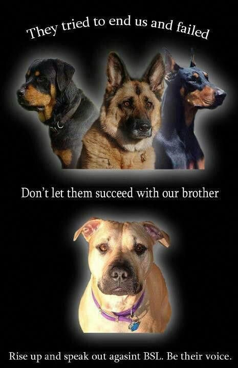 Please  All my favorite dogs #pitbullmemes | Dogs | Dogs, Dog love