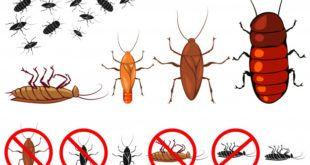شركة الهدى كلين تنظيف منازل مكافحة حشرات عزل اسطح وخزانات Stuff To Buy