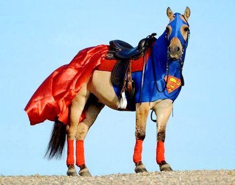 Horse Halloween costumes are a thing.