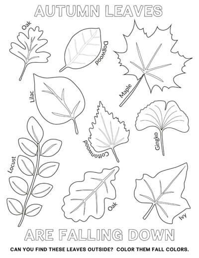 EASY Autumn Leaf Activities And Tracing Page - Tyee Outdoor Experience  Leaf Coloring Page, Fall Coloring Pages, Fall Leaves Coloring Pages