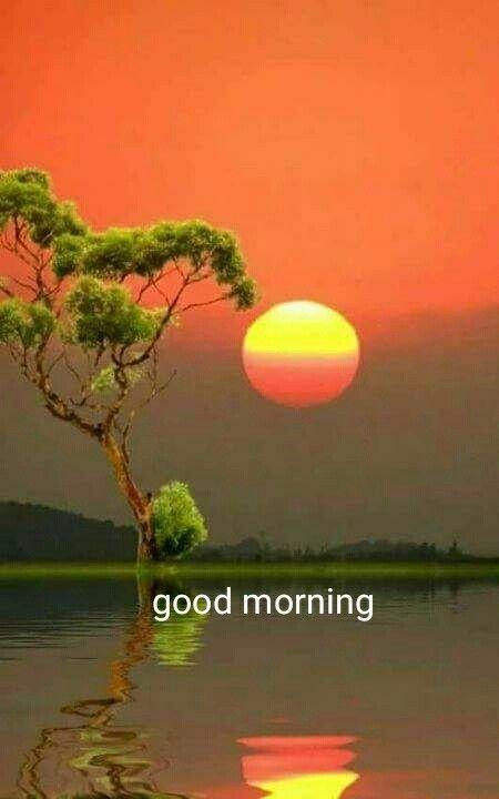 Pin By Gopesh Avasthi On Good Morning Cute Good Morning Images Morning Pictures Good Morning Flowers Gif