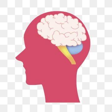 Gambar Otak Otak Manusia Merah Jambu Kecerdasan Otak Otak Manusia Merah Jambu Png Dan Psd Untuk Muat Turun Percuma Ilustrasi Manusia Kartun