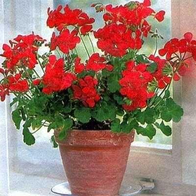 Rosliny Doniczkowe Proste W Uprawie Plants Health Feng Shui