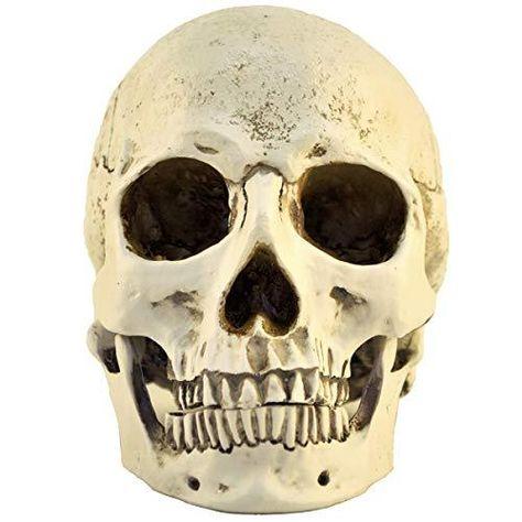 Ennas 1:1 Resin Skull Head Model Simulation Skeleton Head Medical Skull Art Copy for Halloween Decor - Skull