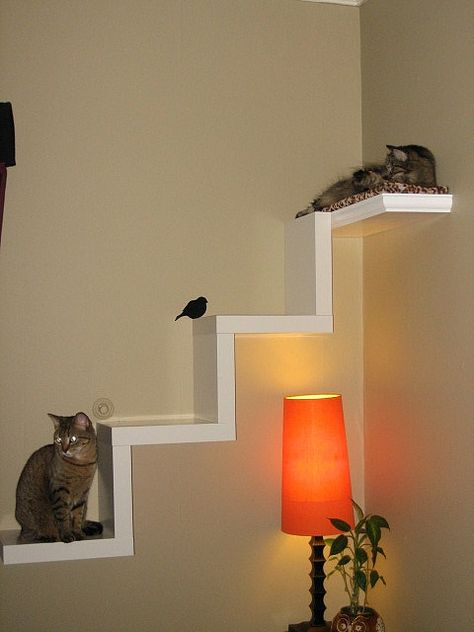 Ikea Lack Shelf made into cat furniture | Flickr - Photo Sharing!