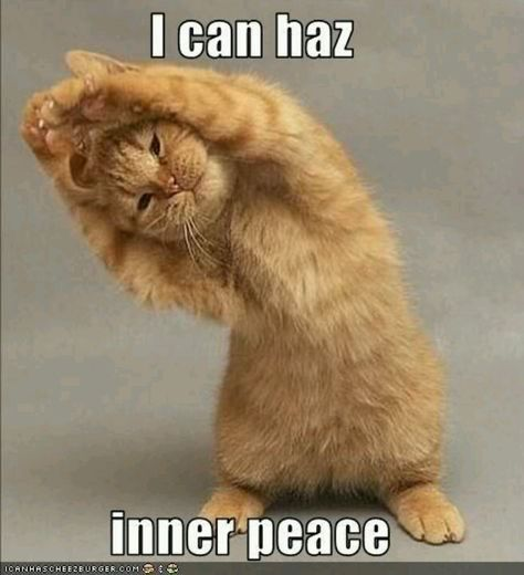 30+ Cat Yoga ideas | cat yoga, crazy cats, funny cats