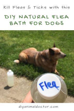 Diy Natural Flea Bath For Dogs Flea Bath For Dogs Flea Shampoo