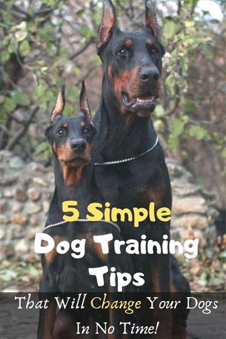 Dog Training Accessories Jump Start Dog Training Yorba Linda