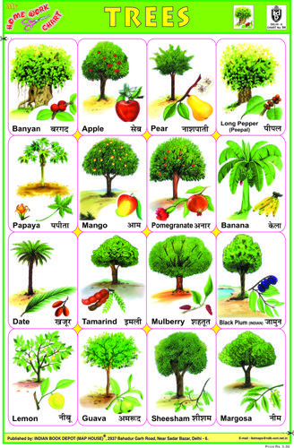 Indian Book Depot Educational Charts Trees For Kids Vegetable Chart Name Of Vegetables