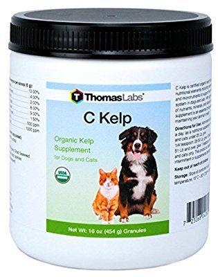 Amazon Com Thomas Laboratories C Kelp Nutritional Supplement