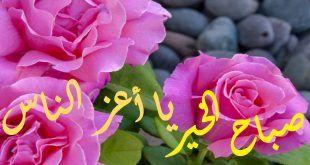 صور صباح الورد كلمات صباحية رقيقة للاصدقاء Rose Plants Flowers