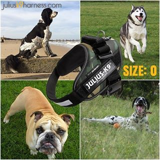 Julius K9 Harness Size 0 Chest Circumference 58 76 Cm 23 30