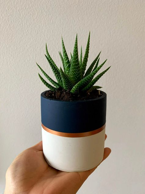 Cement Flower Pots, Cement Planters, Diy Planters, Concrete Pots, Succulent Planters, Painted Plant Pots, Painted Flower Pots, Navy And Copper, Faux Succulents