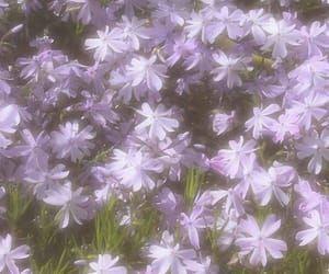329 Imagenes Sobre Express En We Heart It Ver Mas Sobre Soft Rp Y Aesthetic In 2020 Flower Aesthetic Nature Aesthetic Lavender Aesthetic