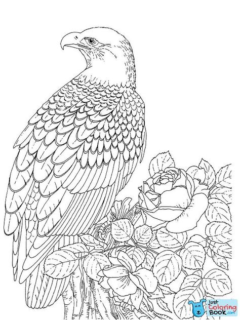 Soaring Bald Eagle Coloring Pages Printable For Free Bird Coloring Pages Animal Coloring Pages Coloring Pages