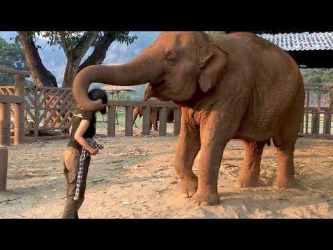 Elefant zieht die Frau zu sich - Der Grund ist unglaublich