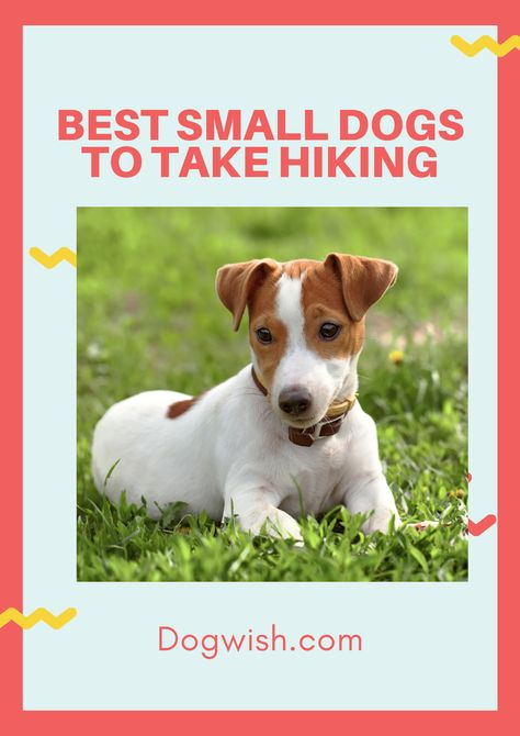 If you're searching for the perfect companion for your hiking trips, you can't go wrong with a lovable canine. Learn which small dogs love to hit the trails with their owners and find out what gear you need to explore the great outdoors safely and comfortably with your pet. #hikingwithdogs #smalldogshiking #smalldog #hikingwithdogs