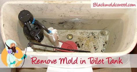 Remove Black Mold From Toilet Bowl Tank And Seat Toilet Bowl