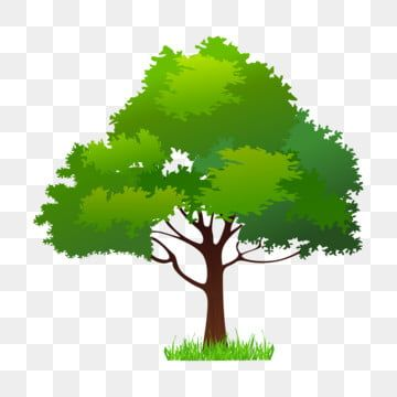 Spring Green Trees Illustration Spring Trees Cartoon Illustration Tree Illustration Png And Vector With Transparent Background For Free Download In 2020 Tree Illustration Leaf Illustration Spring Flowers Background