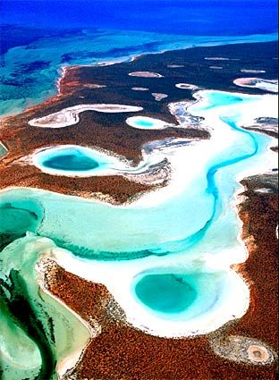 Shark Bay, Western Australia, largest seagrass bed in the world.