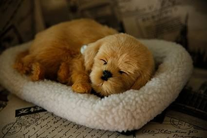 Perfect Petzzz Puppies Pet Tags Puppies Pet Collars