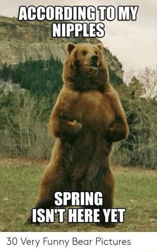 30 Very Funny Bear Pictures Ifunny In 2020 Funny Bear Pictures Funny Bears Funny Animal Memes