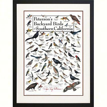 Bird Identification California