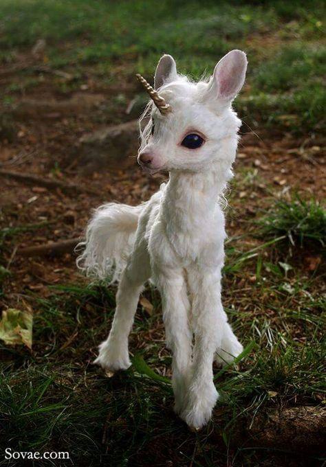 Çoook tatlı ama benim kedim kadar deyil - #Ama #benim #Çoook #deyil #kadar #kedim #tatlı