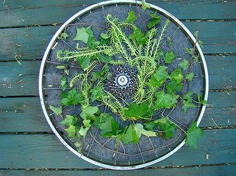 Take one decommissioned bicycle wheel, insert a felt soil pocket between the wheel spokes, grab some wood and some bits of hardware and you've got yourself a rotating vertical garden.