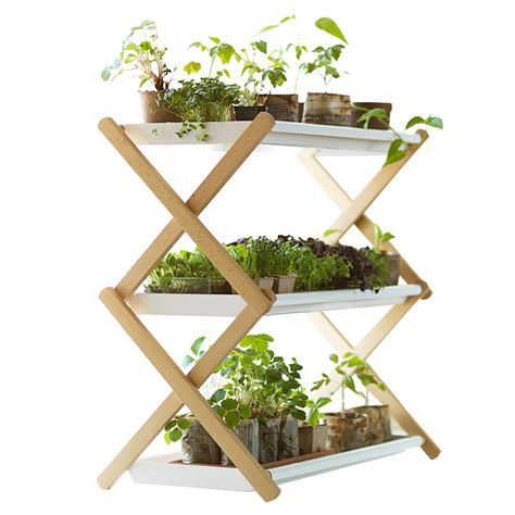 TOOLS /SUPPLIES: SMALL SPACES: THE PLANT SHELF: Designed to help the sprouting and seedling of plants. Helps to grow bigger amounts of sprouts in a much smaller space – even at a kitchen counter or window sill. The shelf is easy to move around & the plants do not necessary need separate saucers since the excess water is collected in the tray. Wooden parts made of beech and shelves are painted steel. Easy storage since the shelves are removable and the frame is foldable.