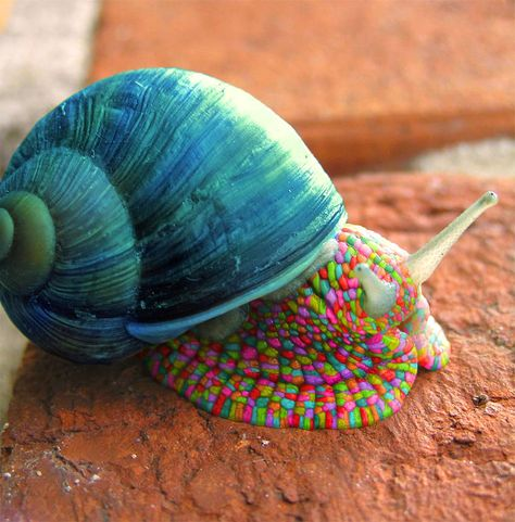 Amazing India Animals-it's a Doctor Dolittle Snail!