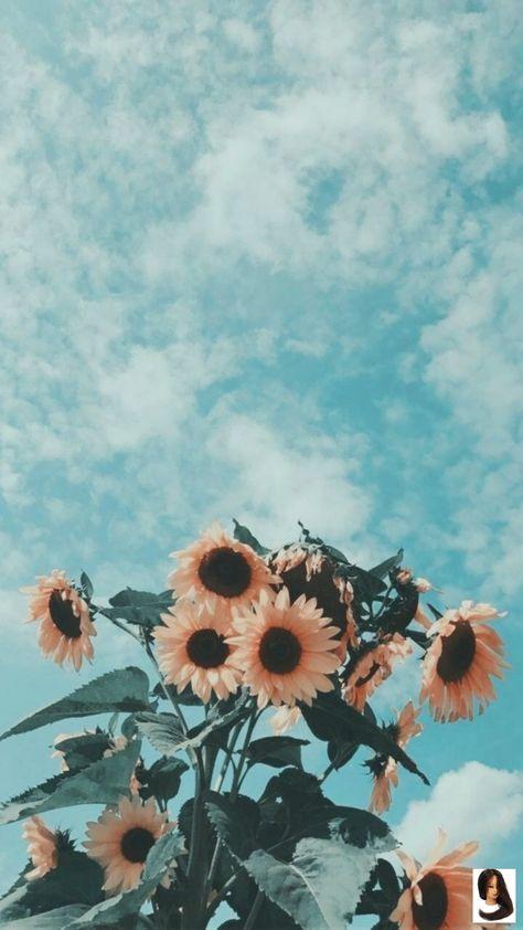 #aesthetic background #alexandralovee ✰P I N T E R E S T : alexandra_lovee        ✰P I N T E R E S T : alexandra_lovee✰ #alexandralovee