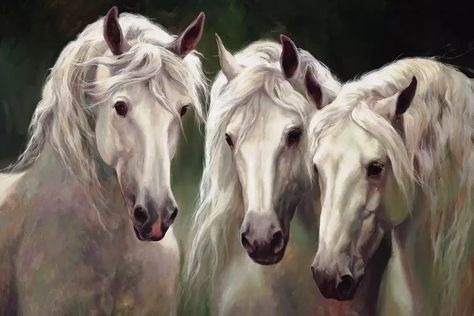 3 White Horses - Canvas Print