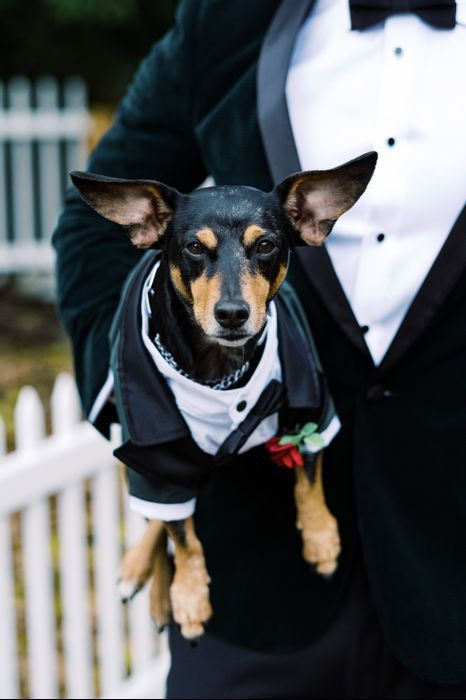 Joseph And Courtney S Wedding In Saint Petersburg Florida Wedding Pets Dog Tuxedo Wedding
