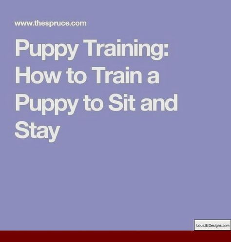 Dog Training How To Stop Barking At Guests And Pics Of How To