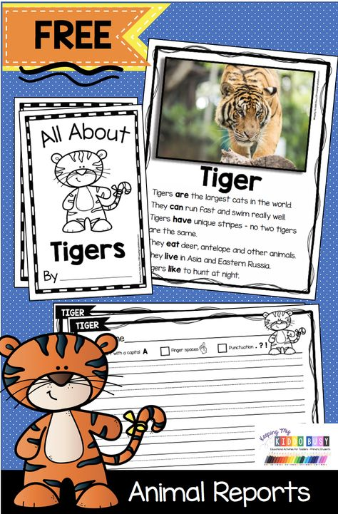 TIGERS Animal Report FREEBIE - Nonfiction Reading and Writing for Primary Students - Kindergarten and First Grade - Non-Fiction resources to teach animal reports and animal crafts - complete curriculum FREE activities and printables - graphic organizers #animalreports #kindergartenreading #kindergartenwriting #firstgradereading #firstgradewriting