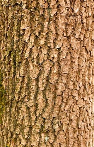 33 Ideas Tree Bark Texture Pattern Woods Tree Bark Texture Tree Bark Free Wood Texture