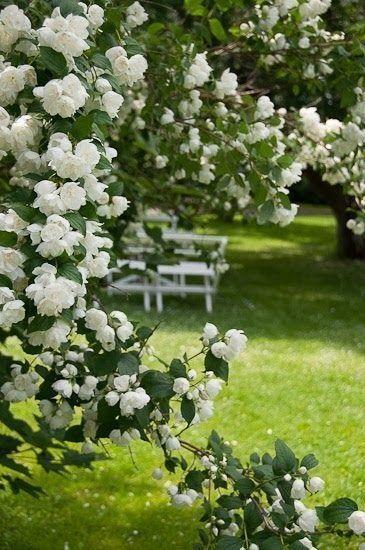 44 Lovely Flower For Your Garden