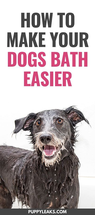 How To Make Bath Time Easier For Your Dog Dog Grooming Tips Dog
