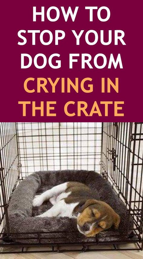 How to Stop Your Dog From Crying in the Crate (Crate Training Wondering about how to crate train your puppy or adult dog? Does your dog keep crying in his crate at night? Find out everything you need to know about crate training. Puppy Training Tips, Training Your Dog, Training Pads, Training Collar, Agility Training, Dog Agility, Dog Crate Training, Potty Training Puppies, Puppy Crate Training Schedule