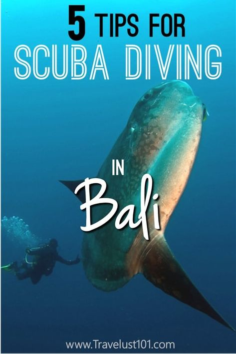 scuba dive | scuba travel | scuba diving | Bali travel | If you are planning a scuba diving trip to Bali, don't miss these tips on how to make the best of your diving trip! #bali #scuba #scubadiving