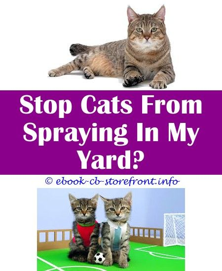 Pets At Home Cat Spray