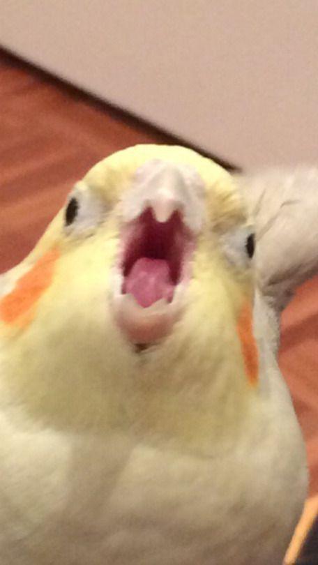meme face - Memes For Funny Cute Animal Memes, Animal Jokes, Cute Funny Animals, Funny Animal Pictures, Memes Lindos, Mood Pics, Cute Little Animals, Cute Birds, Funny Birds