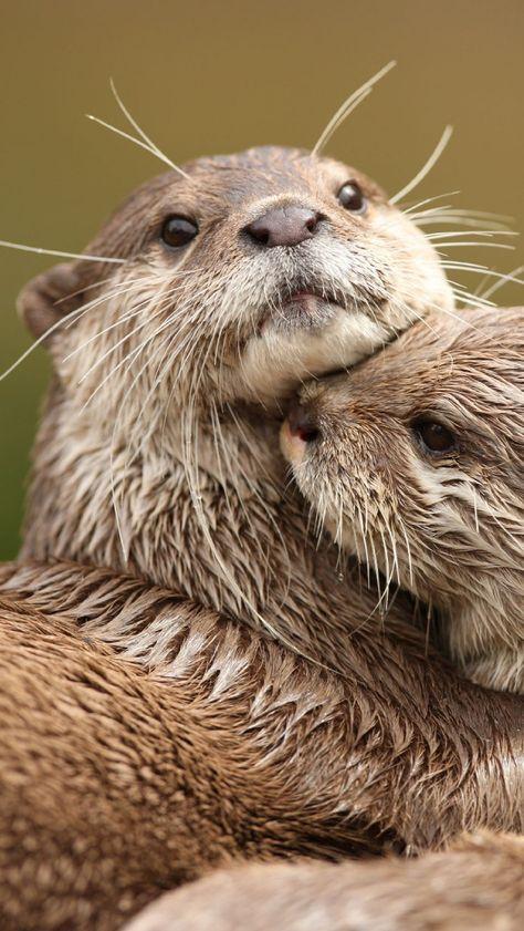 Otter Cuddle Up